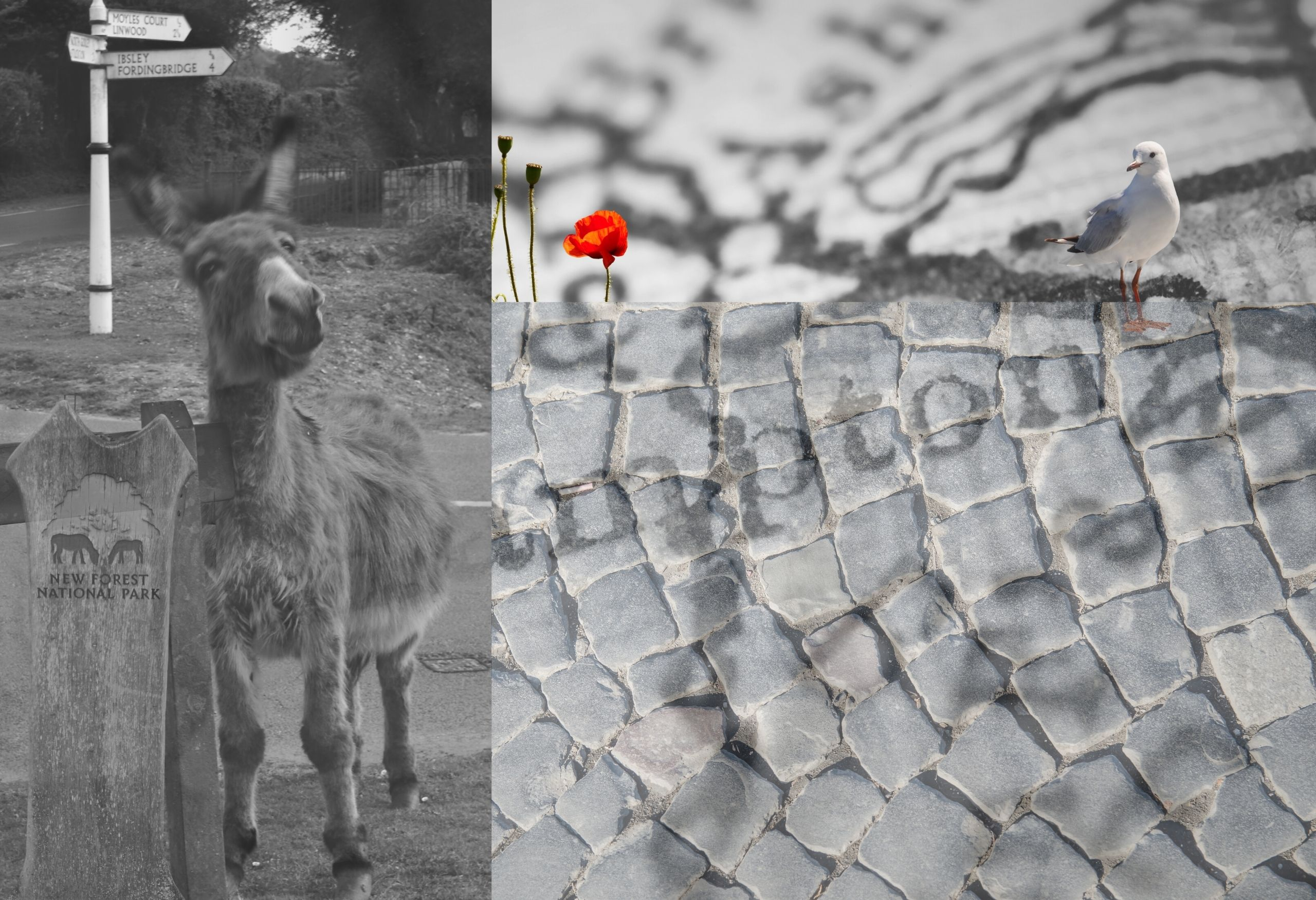 images of Britain cobbled streets New Forest donkeys and Poppies
